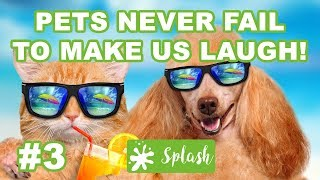 Pets Never Fail To Make Us Laugh - Funny Animal Compilation - Dogs and Cats video #3 by Splash!