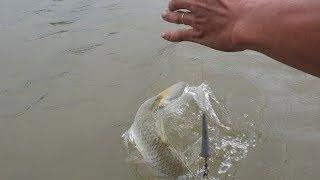 Khai trương cần câu mới dính luôn hàng khủng. Cách làm mồi câu cá sông | Săn bắt SÓC TRĂNG |