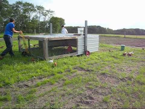 Moving the Chicken Tractor