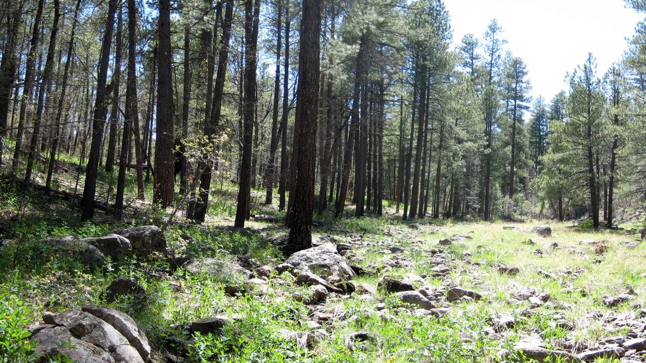 Rocky Park Near Munds Park Northern Arizona Rv Camping