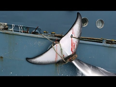Japan To Restart Commercial Whaling?