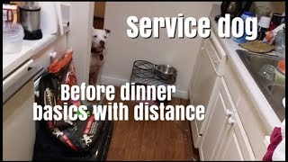 Service dog - before dinner basicis with distance