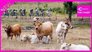 Pourquoi est-il indispensable de regarder l'étape du Tour à Mende, même si vous n'aimez pas le vélo