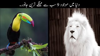 9 Most Expensive Animals In The World Urdu | دنیا میں موجود سب سے مہنگے ترین جانور | Haider Tv
