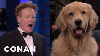 Scraps: Dogs Can't See The Same As Humans!