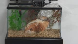 Marineland® Products — 10 Gallon Aquarium Kit Setup