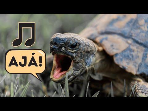 Ajá, ajá o, rànmí lé̩rù - Yoruba Folk Song
