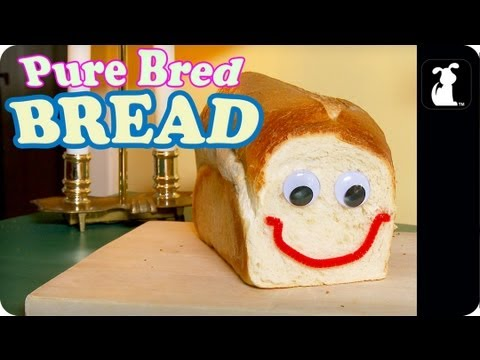 Pure Bred Bread – The Most Versatile Pet in the World!