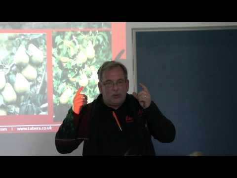 Über Birnenzüchtung Auf Resistenzen Und Birnengitterrost - Easy Gardening Teil 14 Von 35