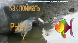 Как поймать рыбу? ↔ How to Catch a Fish? | RUSSIAN 1: BEGINNER