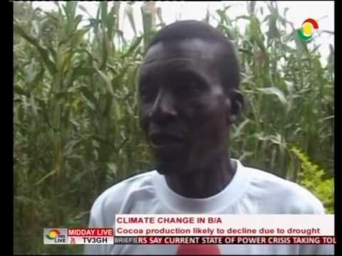 Cocoa production likely to decline due to drought in Brong Ahafo - 26/7/2016