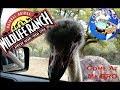 Natural Bridge Wildlife Ranch Tour