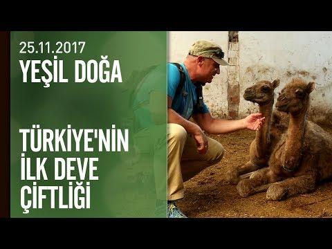 Yeşil Doğa Türkiye'nin ilk deve çiftliğini ve 'Mutaflar'ı ekrana taşıdı - 25.11.2017 Cumartesi