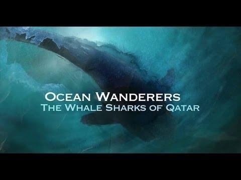 Whales in Oceans Ocean Wanderers Whale Shark