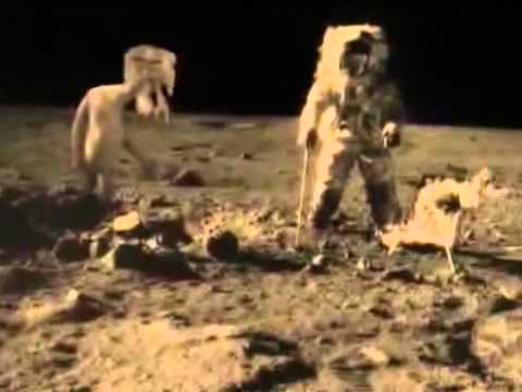 На луне живет Петух