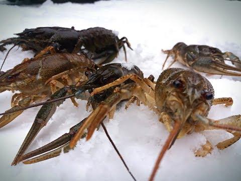 Ловля КРУПНЫХ РАКОВ ЗИМОЙ на удочку| Catching large crayfish in the winter for bait