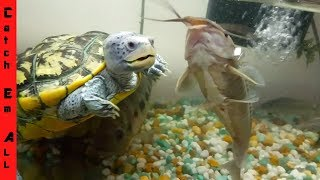 TURTLE vs FISH! World Record in AQUARIUM COLLECTION!