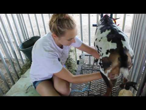 Milking Goats with Melissa