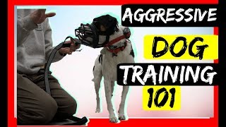 Stop Serious Dog Aggression with an Ecollar - Dog aggression Ecollar correction  tutorial!