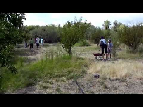 Apple Picking - Wickenburg, Arizona