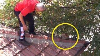 Çatıda Mahsur Kalan Kedi İçin İtfaiye Ekipleri Seferber Oldu