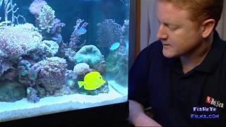DAILY Reef care in your Aquarium REDSEA MAX