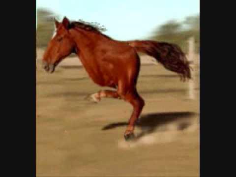 Worlds Ugliest Horse Hqdefault.jpg