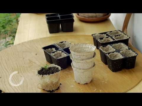 DIY recycled paper seedling pots