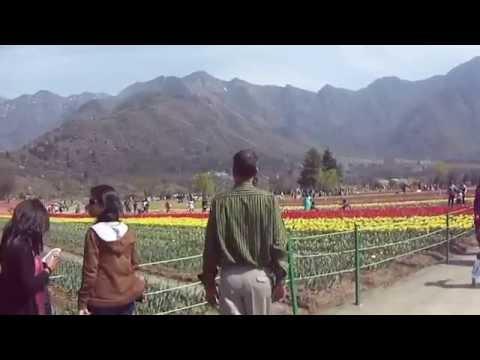 Tulip Garden, Srinagar, Jammu & Kashmir, India