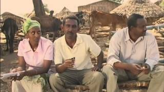 Livestock Fattening Innovation In Ethiopia