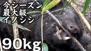 イノシシ射撃残り玉1発 【狩猟】グロなし Wild big boar