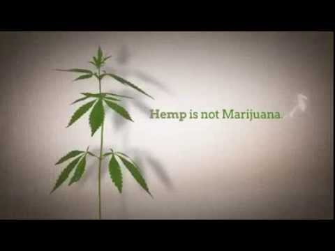 Hemp MLM Overview |CBD Rich Hemp Oil Business Opportunity | Cannabis Network Marketing