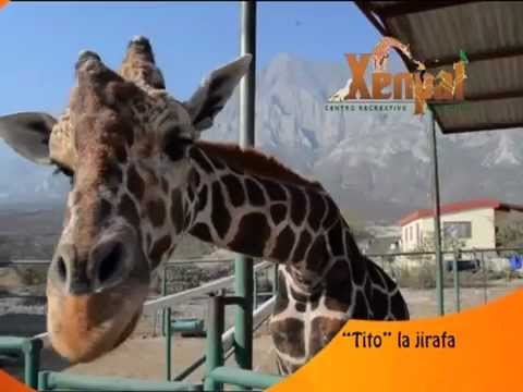Parque Xenpal Ven Y Vive Esta M 193 Gica Aventura Youtube