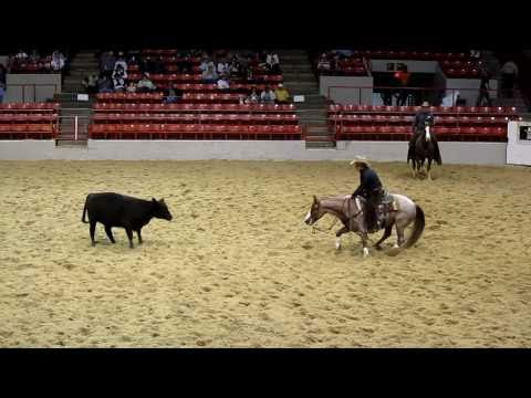 Houston Rodeo Professional Cutting Horse Competition