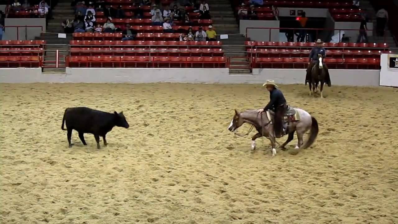 Houston Rodeo Professional Cutting Horse Competition - YouTube