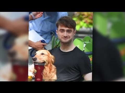It's a Dogs Life For Daniel Radcliffe As He Films New Movie