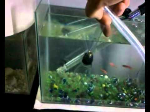 Como criar pez cebra danio cebra youtube for Peces para criar