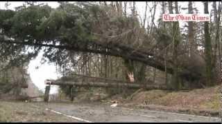Trees block A828 road at Barcaldine