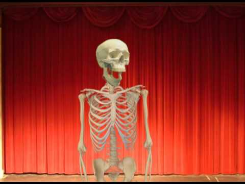 2012 Skeleton Theatre, New Skull thumbnail