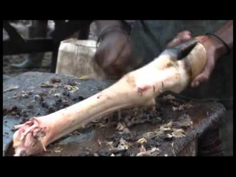RTI/Economie: les petits metiers autour de l'abattoir de Bouaké