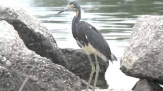 BP marée noire conséquence écologiques