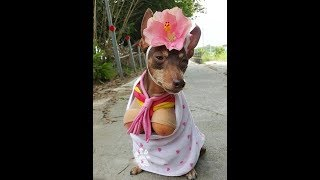 Funny Animal Costume Funny Pictures Of Animals In Costume