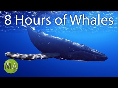 8 Hours of Whale Sounds Deep Underwater for Sleep and Relaxation