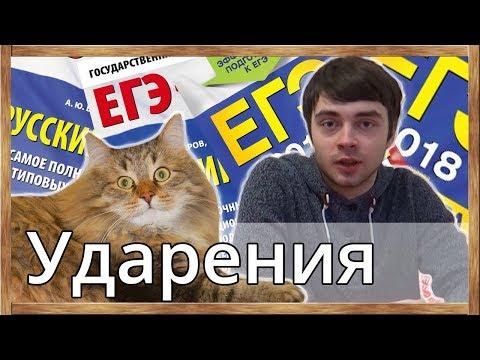 Кот и ударение в словах. ЕГЭ по русскому языку будет сдан!