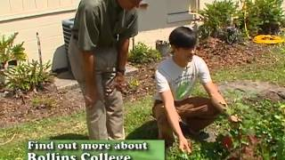 Central Florida Gardening - Organic Raised Beds