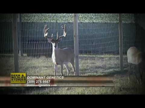 Only 1 Can Dominate | Deer & Wildlife Stories