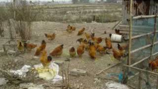 My Farm in TaiShan China