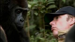 Human and Gorilla Reunite after 5 years 60 Minutes Australia June 3rd 2012