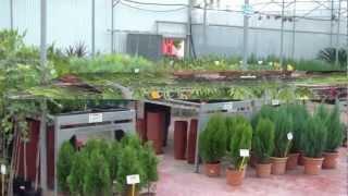 Árboles para tu jardín en Cartagena