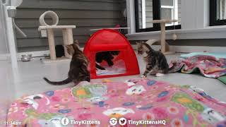 The Auracuda takes Allie and Bentley kittens camping!  TinyKittens.com